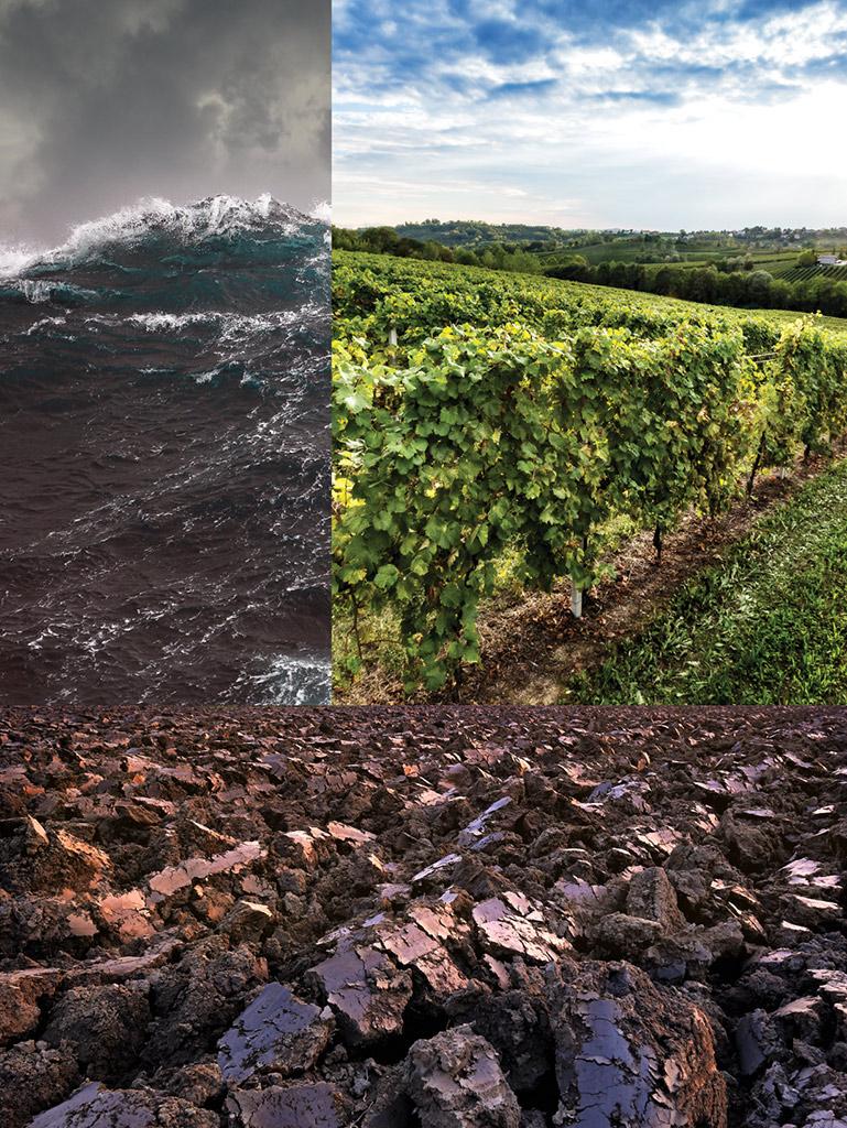 900 wine: composizione rappresentante il territorio italiano e le peculiari caratteristiche che lo contraddistinguono