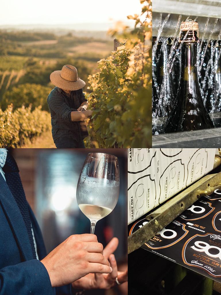 900 wine: composizione rappresentante i vari processi di produzione della linea 900