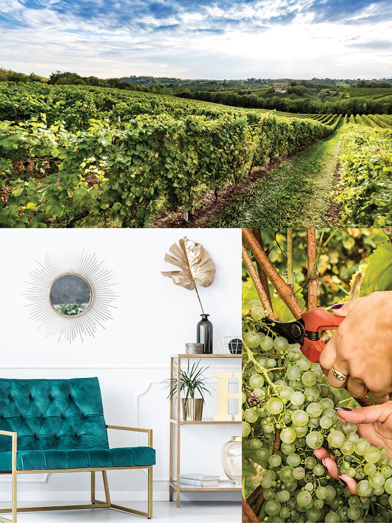 900 wine: composizione rappresentante le caratteristiche del spumante Gran Cuvée