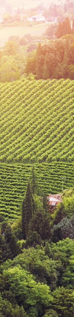 900 wine: italia terra di passione, storia e qualità, che rappresenta il vero made in italy senza compromessi