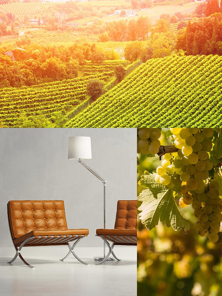 900 wine: composizione rappresentante le caratteristiche del prosecco DOC Millesimato